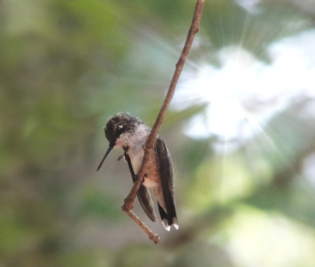 winged flight1